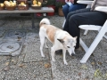 08 Canina - Wandeldag en Rommelmarkt - ©Noordernieuws - DSC_3290