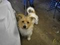 15 Canina - Wandeldag en Rommelmarkt - ©Noordernieuws - DSC_3297