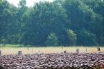 Kamp Westerbork - Jules Schelvis - 3 april - (c) Vincent Luijer - Noordernieuws.be - P1010994