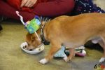 155 Leerlingen Freinetschool Essen vieren hondje Lewis 3 jaar - (c) Noordernieuws.be 2019 - HDB_2107