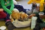 161 Leerlingen Freinetschool Essen vieren hondje Lewis 3 jaar - (c) Noordernieuws.be 2019 - HDB_2113