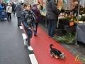 11 Essen - Gezellige Kerstmarkt - Noordernieuws.be - DSC_4813_s