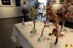 104 Arboretum Kalmthout - Miss Hamamelis verkiezing 2020 - (c) Noordernieuws.be - 02