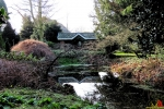 106 Arboretum Kalmthout - Miss Hamamelis verkiezing 2020 - (c) Noordernieuws.be - 04