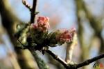 118 Arboretum Kalmthout - Miss Hamamelis verkiezing 2020 - (c) Noordernieuws.be - 16