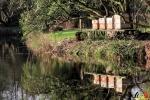 122 Arboretum Kalmthout - Miss Hamamelis verkiezing 2020 - (c) Noordernieuws.be - 20
