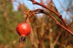 123 Arboretum Kalmthout - Miss Hamamelis verkiezing 2020 - (c) Noordernieuws.be - 21