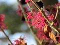 110 Arboretum Kalmthout - Miss Hamamelis verkiezing 2020 - (c) Noordernieuws.be - 08
