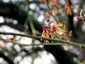 114 Arboretum Kalmthout - Miss Hamamelis verkiezing 2020 - (c) Noordernieuws.be - 12