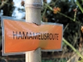 115 Arboretum Kalmthout - Miss Hamamelis verkiezing 2020 - (c) Noordernieuws.be - 13