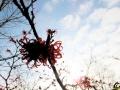 116 Arboretum Kalmthout - Miss Hamamelis verkiezing 2020 - (c) Noordernieuws.be - 14