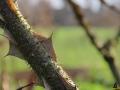 117 Arboretum Kalmthout - Miss Hamamelis verkiezing 2020 - (c) Noordernieuws.be - 15