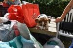 30 Canina 2016 - Essen - ©Noordernieuws - DSC_1104