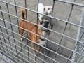 22 Canina 2016 - Essen - ©Noordernieuws - DSC_1096