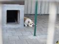 154 Canina opendeurdag augustus 2019 - (c) Noordernieuws.be - HDB_8148