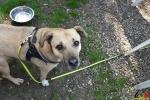 11 Wandeldag Dierenopvang Canina  - (c) Noordernieuws.be - DSC_1992