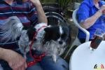 12 Wandeldag Dierenopvang Canina  - (c) Noordernieuws.be - DSC_1993