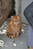 28 Wandeldag Dierenopvang Canina  - (c) Noordernieuws.be - DSC_2009