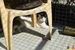 30 Wandeldag Dierenopvang Canina  - (c) Noordernieuws.be - DSC_2011