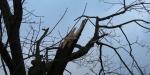 Storm Ciara zorgt voor schade en ellende-