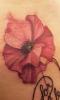 Els Deckers - Beroep Tatoeëerder - Tattoos - Tatoeage - (c) Noordernieuws.be 2020 - 20200227_205905s85
