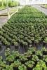 15 Tuincentrum Den Donk - Opendeurdag - 30 jaar - Noordernieuws.be