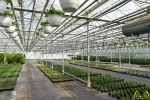 19 Tuincentrum Den Donk - Opendeurdag - 30 jaar - Noordernieuws.be