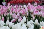 105 Vandaag gratis Tulpenpluk met Suske en Wiske - Noordernieuws.be - 03