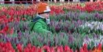 108 Vandaag gratis Tulpenpluk met Suske en Wiske - Noordernieuws.be - 06