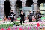 125 Vandaag gratis Tulpenpluk met Suske en Wiske - Noordernieuws.be - 23