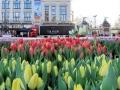 107 Vandaag gratis Tulpenpluk met Suske en Wiske - Noordernieuws.be - 05