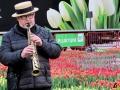 116 Vandaag gratis Tulpenpluk met Suske en Wiske - Noordernieuws.be - 14
