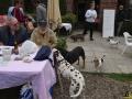 07 Dierenasiel Canina - Wandeldag en Rommelmarkt augustus 2018 - Essen - (c) Noordernieuws.be - HDB_8893