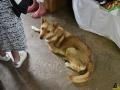 27 Dierenasiel Canina - Wandeldag en Rommelmarkt augustus 2018 - Essen - (c) Noordernieuws.be - HDB_8913