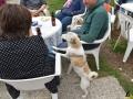 30 Dierenasiel Canina - Wandeldag en Rommelmarkt augustus 2018 - Essen - (c) Noordernieuws.be - HDB_8916