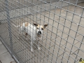 58 Dierenasiel Canina - Wandeldag en Rommelmarkt augustus 2018 - Essen - (c) Noordernieuws.be - HDB_8944