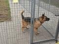 59 Dierenasiel Canina - Wandeldag en Rommelmarkt augustus 2018 - Essen - (c) Noordernieuws.be - HDB_8945