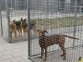 60 Dierenasiel Canina - Wandeldag en Rommelmarkt augustus 2018 - Essen - (c) Noordernieuws.be - HDB_8946