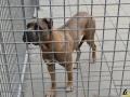 61 Dierenasiel Canina - Wandeldag en Rommelmarkt augustus 2018 - Essen - (c) Noordernieuws.be - HDB_8947