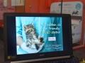 112 Dierenartsenpraktijk 't Hof - Ilse Castelijns - Opendeurdag Gold Status Cat Friendly Clinic 2019 - (c) Noordernieuws.be - HDB_2945
