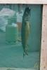 09 Visrookwedstrijfd De Meeuw - ©Noorrdernieuws - DSC_0704