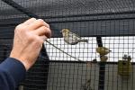 Dirk-De-Rycke-vogelliefhebber-Hobby-vogels-cNoordernieuws.be-HDB_2770s