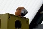 Dirk-De-Rycke-vogelliefhebber-Hobby-vogels-cNoordernieuws.be-HDB_2787s