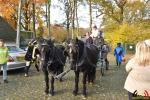 056 Intocht Sinterklaas Heikant Essen 2017 - (c)Noordernieuws.be - DSC_7385