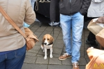 018 Gezellige Paasmarkt Essen 2017 - (c) noordernieuws.be
