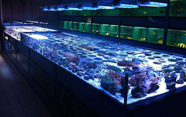Aquarium Brouwers zeeaqaurium en koralen