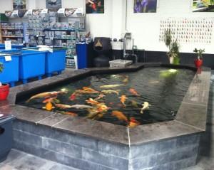 Vijver afdeling Aquarium Brouwers - Roosendaal