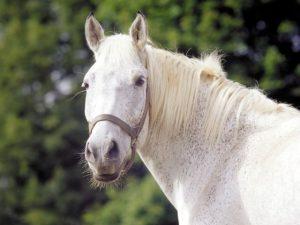 Het paard van Sinterklaas heet Slechtweervandaag