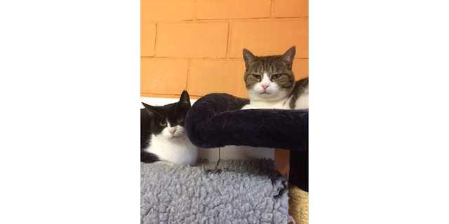 Hou je van katten, dan hou je van ons!