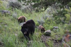 Berin in Yellowstone met twee jongen
